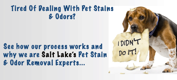 Pet stain & odor removal salt lake city